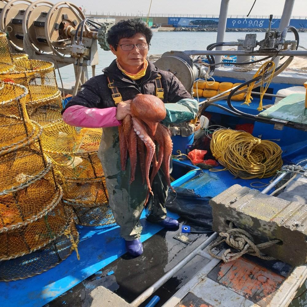 영구호 포항구룡포(국내산)당일선주가직접잡은참문어, 1개, kg