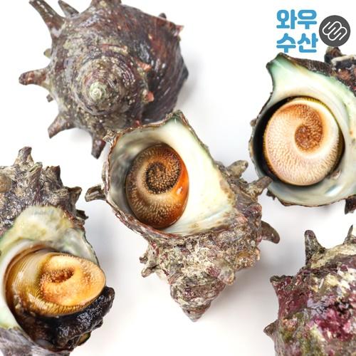 자연산 제주 뿔소라 생물 1kg 제주도 해녀가 잡는 맛남의광장 뿔소라회