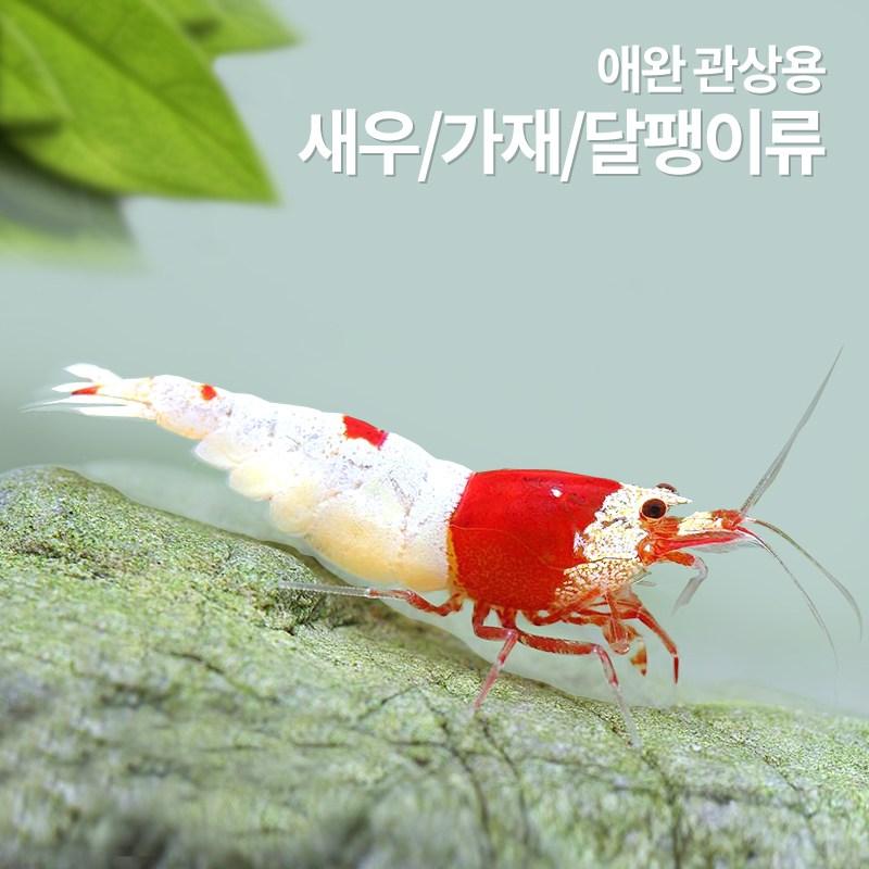 헬로아쿠아 모음)수족관 애완용새우 가재 어항용달팽이 체리새우, 168번