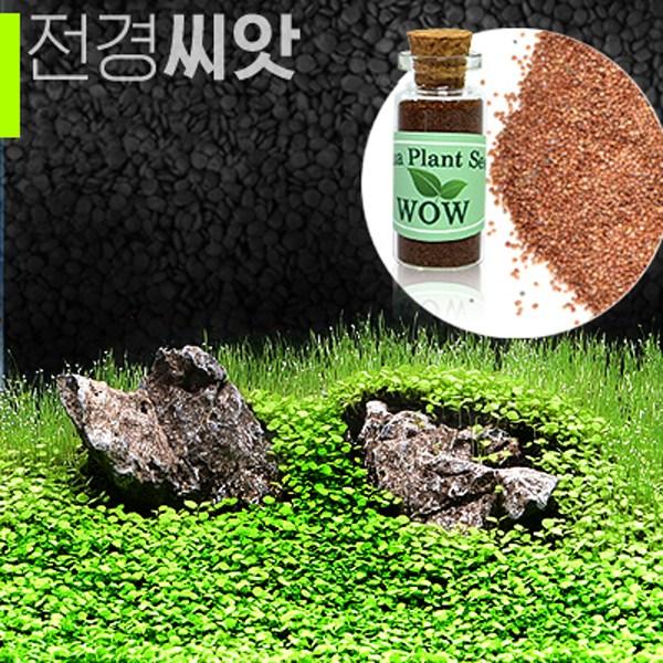 전경수초 발아씨앗(어항장식 수족관꾸미기)