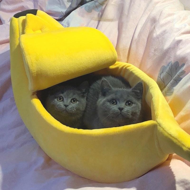 싸바싸바 고양이 강아지 바나나 숨숨집 길고양이 산소방, 옐로우
