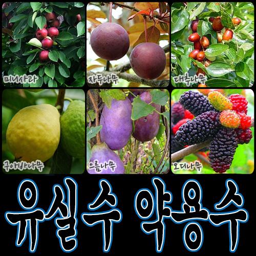 순희농장 대봉 모과 매실 홍도화 오디 구아바 오미자 포도 아로니아 칼슘 비파 보리수, 미니사과포트, 1개