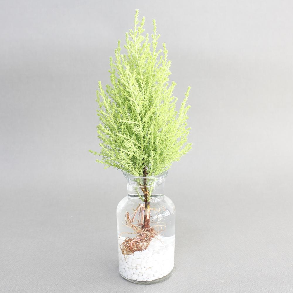 아이엠플랜트 수경재배 공기정화식물 수경식물, 유리병 율마, 1개