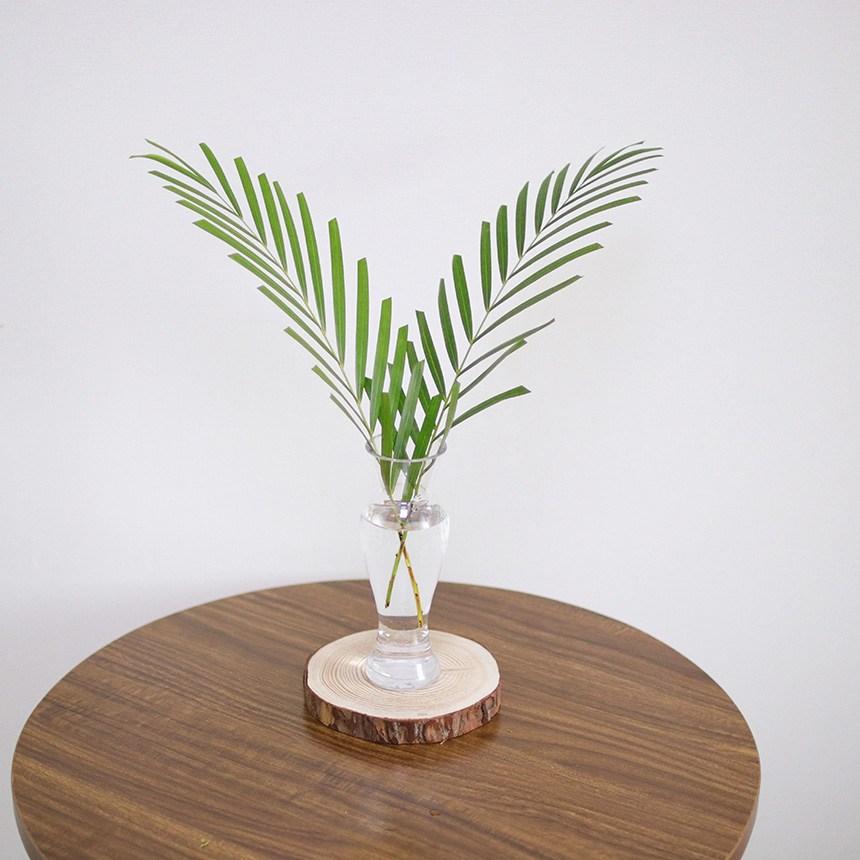 스위트피부티크 루스커스 몬스테라 야자수잎 엽란 그린테리어 수경식물, 야자수잎(2대/A타입)