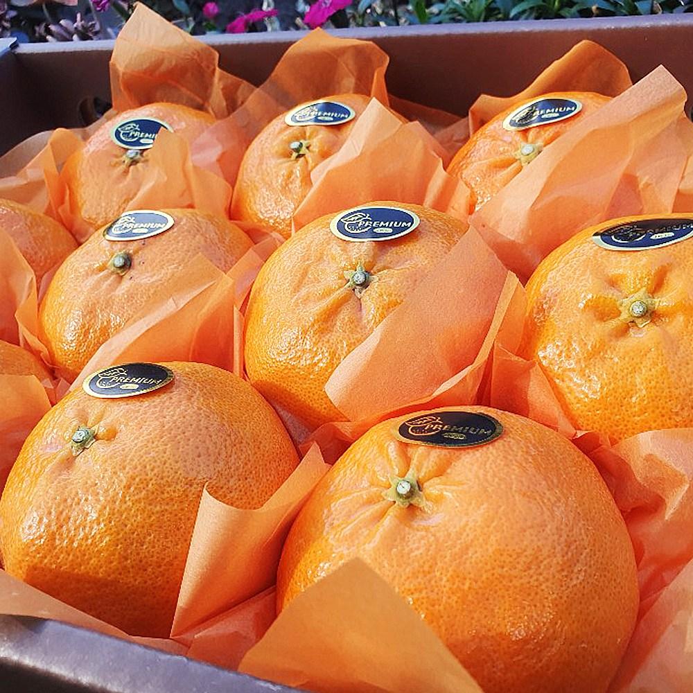 제주 프리미엄 레드향 설 설날 명절 선물세트 고급 3kg 5kg 과일 추석, 1.레드향 가정용 3kg(7-15과)