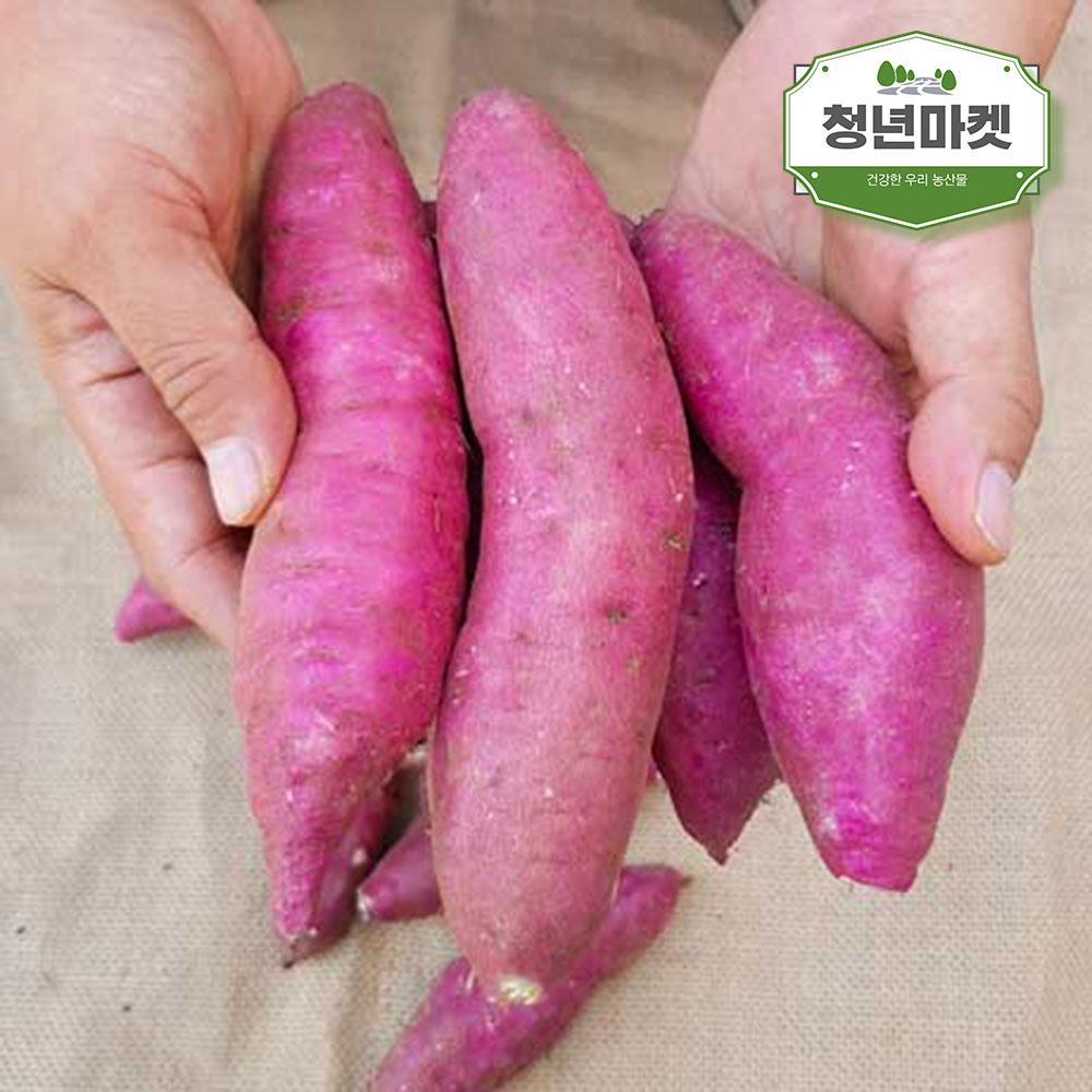청년마켓 20년 첫출하 햇꿀고구마 밤고구마 베니하루카 호박고구마, 1박스, 한입 5kg