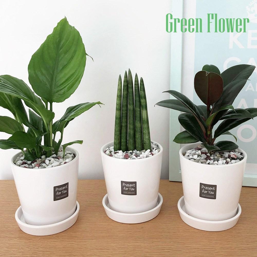 Green Flower 그린플라워 소형 도자기 화분 3종 3번세트 스파트필름 스투키 멜라니고무나무, 화이트