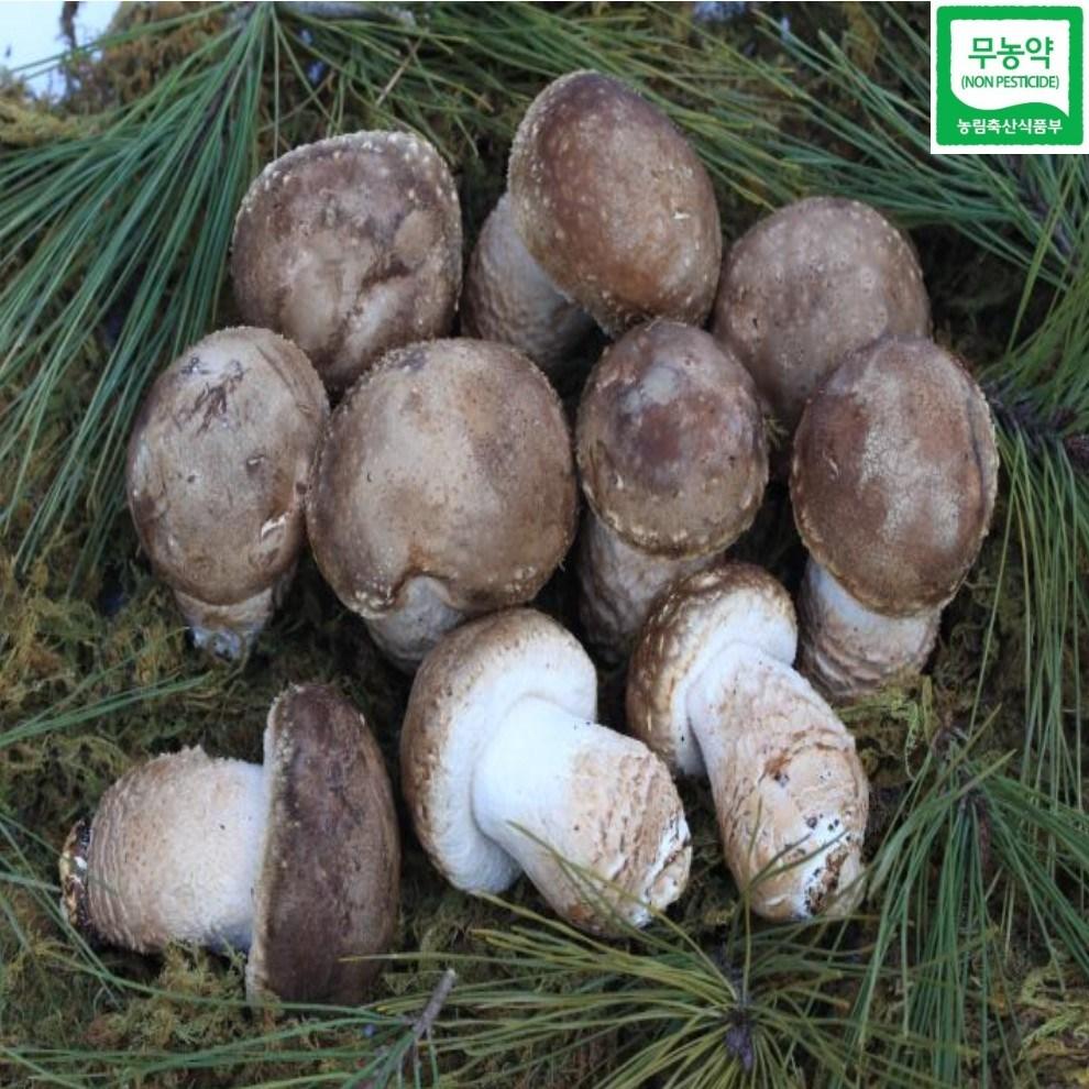 송화버섯(중)1kg/산지배송, 1box, 1kg