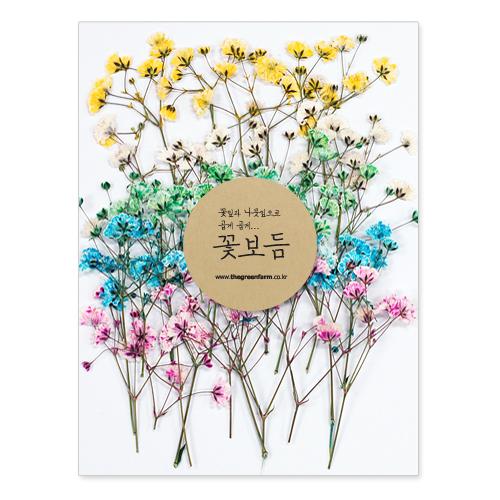 그린팜네이처 꽃보듬 압화-세트, 세트9(안개꽃)