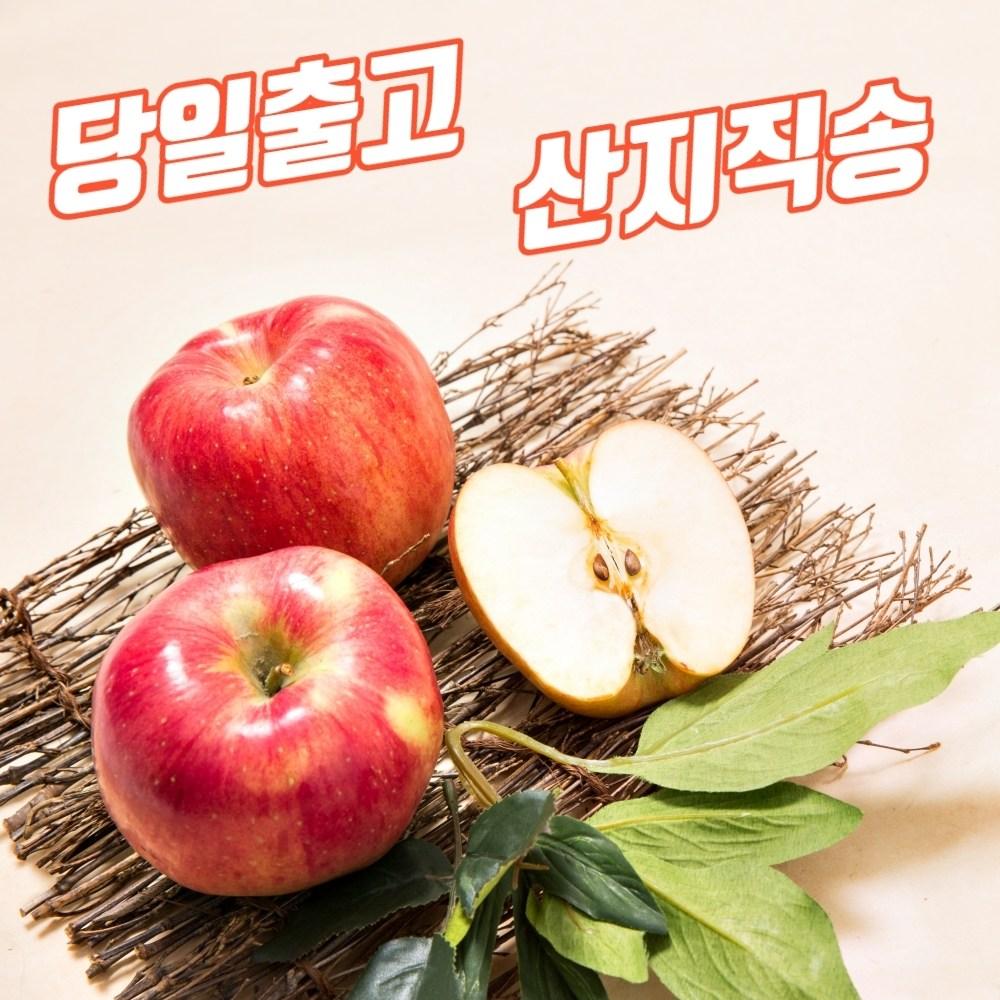 껍질째먹는 당도높은 사과 맛있는곳 유명한곳 흠집 흠과 못난이 알뜰 보조개 5키로 10키로 5kg 10kg 한박스, ★ 가정용 중소  5kg (18-26과)