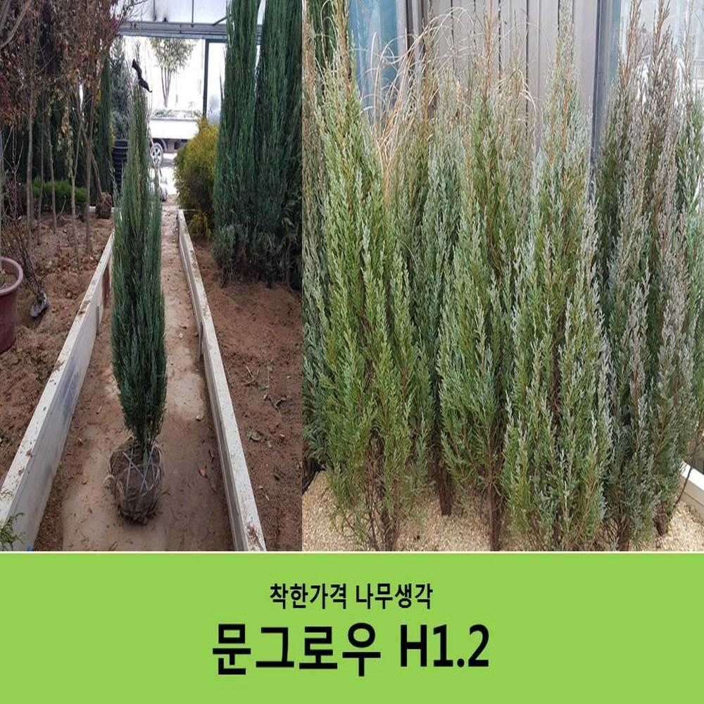 착한가격 나무생각 문그로우 H1.2(1M20CM)