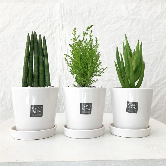 Green Flower 그린플라워 소형 도자기 화분 3종 2번세트 스투키 율마 미니알로에, 레드