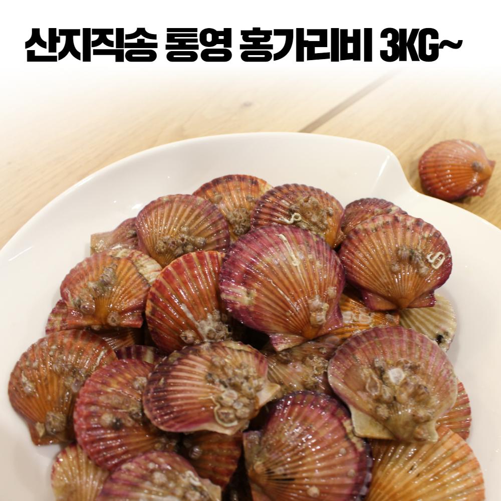 통영 홍 가리비 세척 햇가리비 조개구이 가리비찜 제철 해산물 3kg 4kg 5kg, 통영 홍가리비 3kg