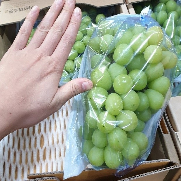 가람상점 씨없는포도 상주 김천 제철 샤인머스켓 수입산 애플 청포도 캠밸 거봉 1kg 2kg 3kg 4kg 8kg, 1개, 샤인머스켓 2kg (3~4) 가성비