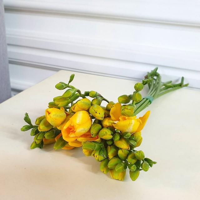 [플라라] 후리지아 생화 프리지아 꽃다발, 01. 후리지아 1단
