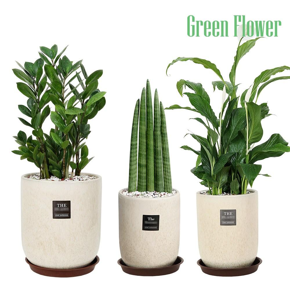Green Flower 그린플라워 베이지 도자기 화분 대형 중형 3종세트 금전수 스투키 스파트필름