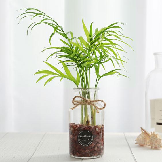 그린테라피 수경재배식물 유리병 실내공기정화식물 수중식물키우기 DIYSET, 테이블 야자+직선