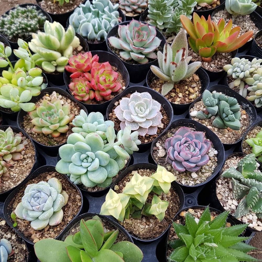 제이팟다육 다육식물세트 공기정화식물, 천원다육식물 10개 세트