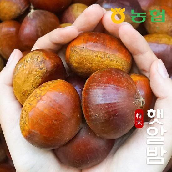 [농협] 토실토실 고소한 순창 알밤 특대 7kg 햇밤, 햇알밤 특대 7kg, 상세설명 참조