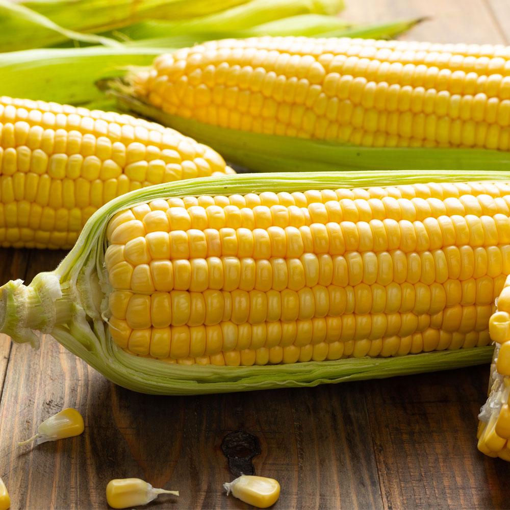 유기농 고당도 달콤 초당 옥수수 충북 미원농가 직접재배 프리미엄 품질 높은 당도 다이어트, 유기농 초당옥수수 10개