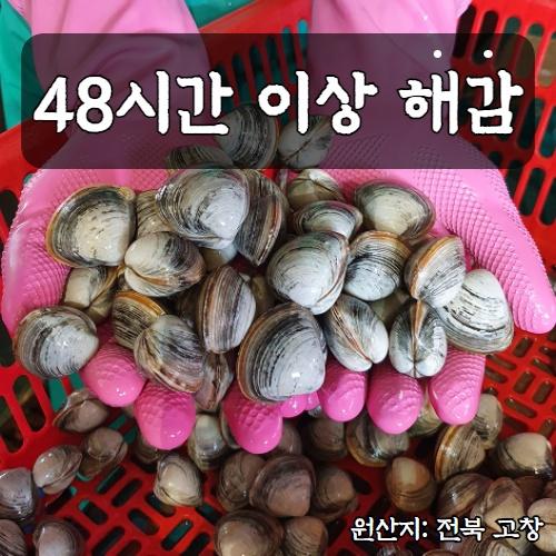 해감 된 동죽조개 바지락 3kg 5kg 고창 하전갯벌 물총조개, 해감 동죽조개 3kg