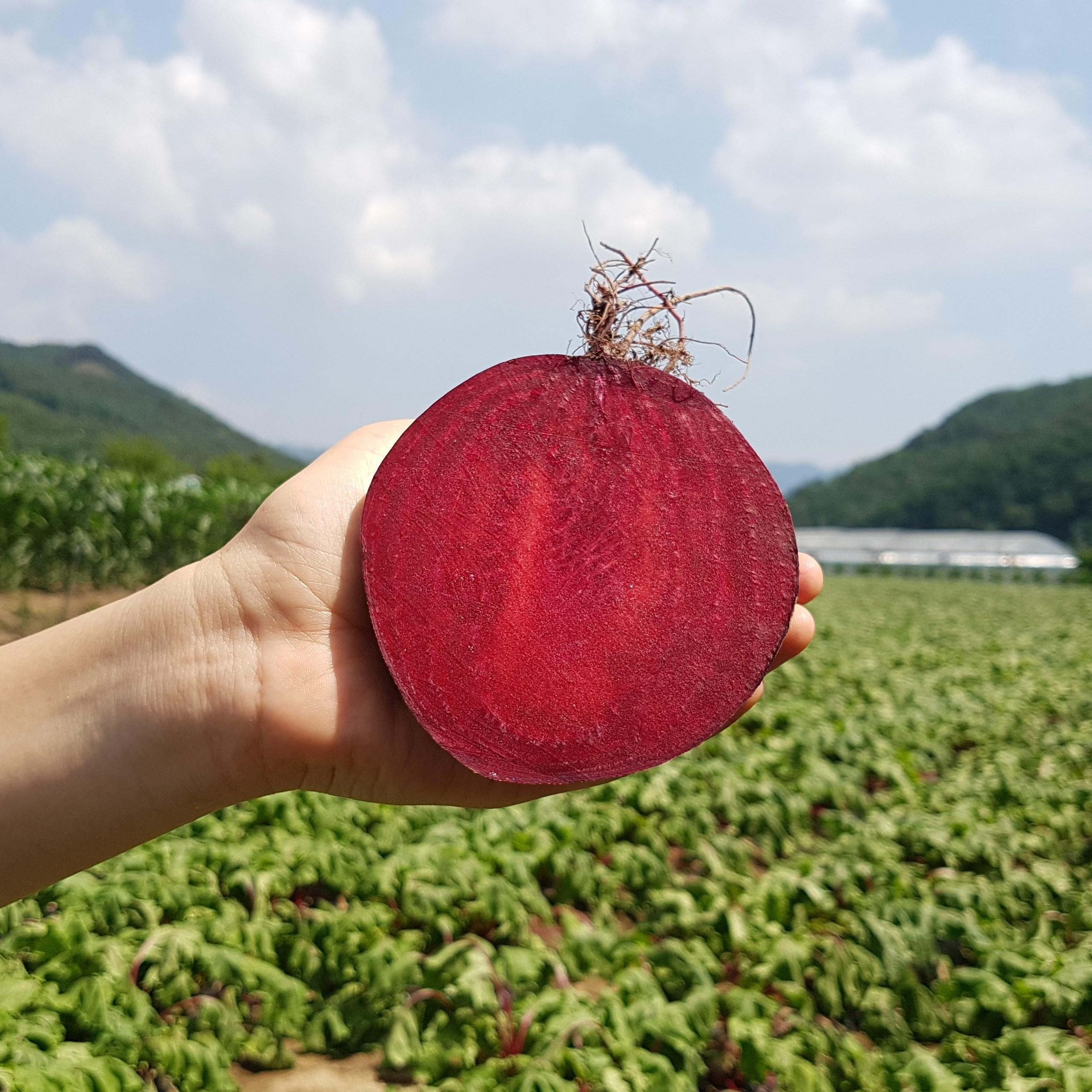 FRESH 국내산 무농약 유기농 비트, 1박스, 2kg