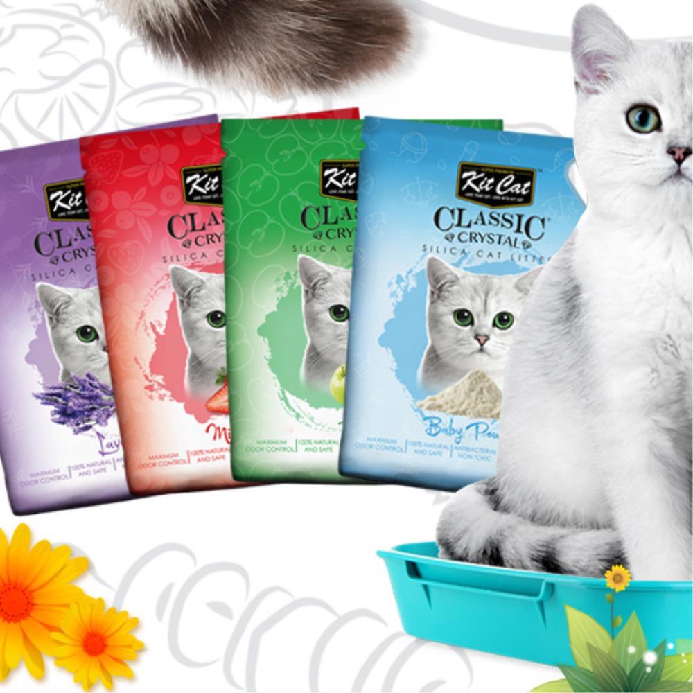 다이써 킷캣 고양이모래 크리스탈 모래 딸기 5L 반려용품