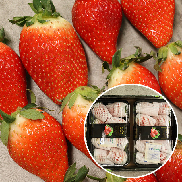 충남 논산 킹스베리 딸기 1kg (개당 35g 이상), 단일상품
