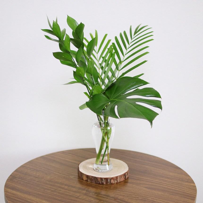 스위트피부티크 루스커스 몬스테라 야자수잎 엽란 그린테리어 수경식물, 루스커스(4대)