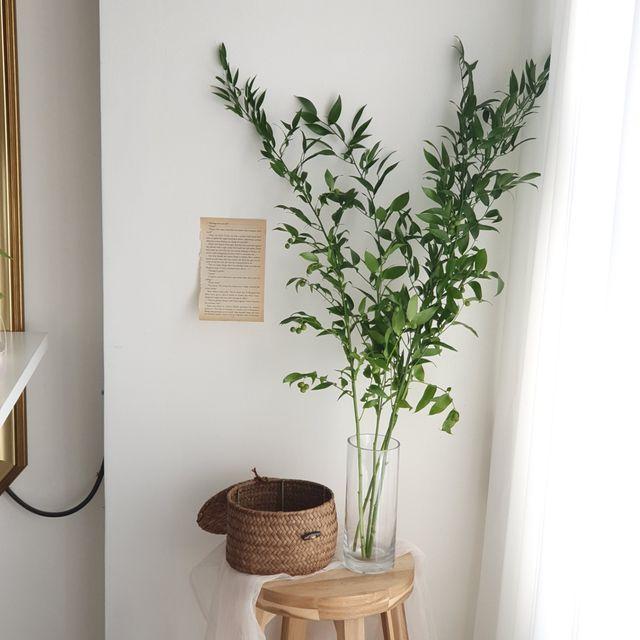 [천삼백케이] [라튤립] 신루스커스 생화 인테리어 잎가지, 단품
