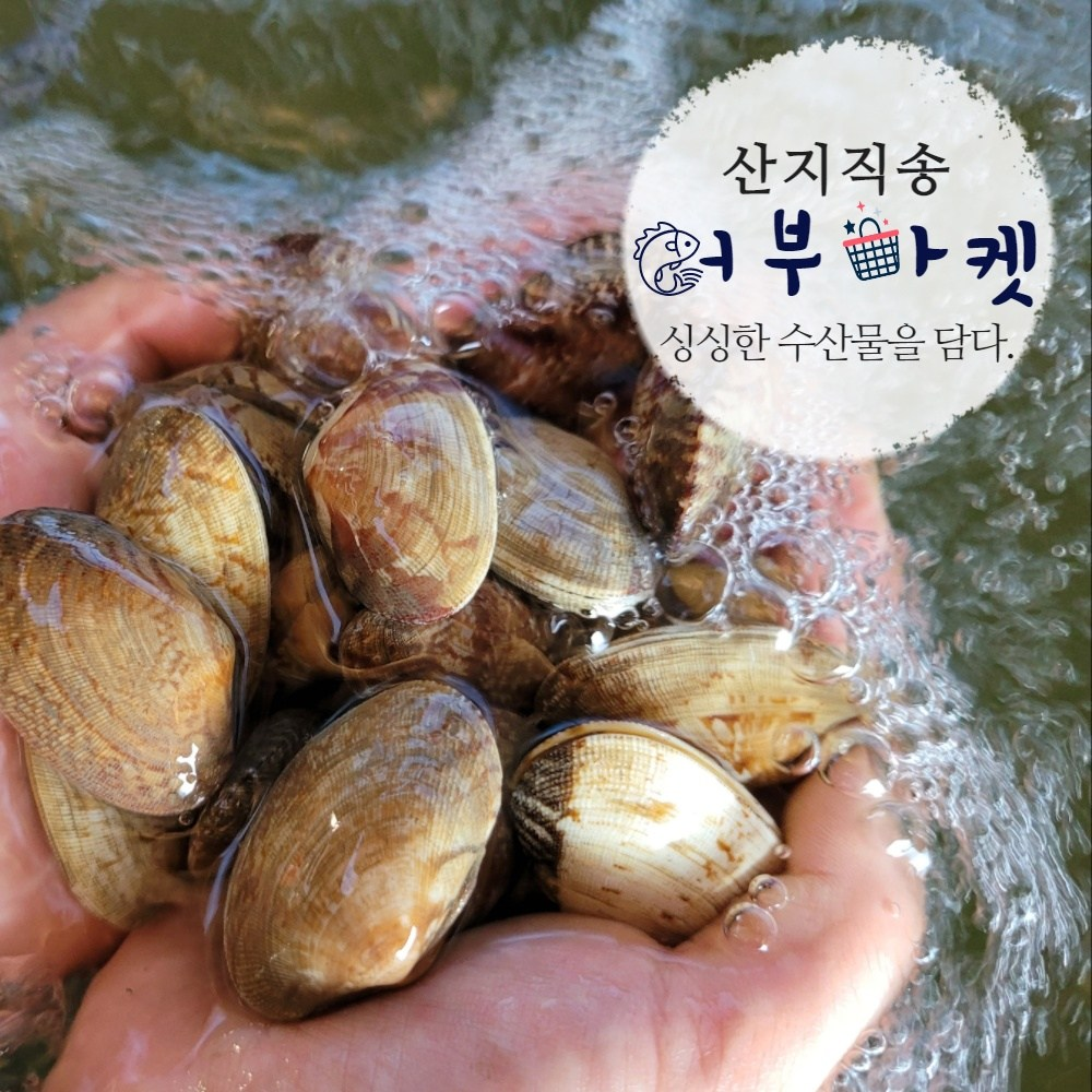 [통영어부마켓] 산지직송 어머님들이 당일 채취한 통영(자연산) 바지락 1kg, 1개, 바지락 (일반) 1kg
