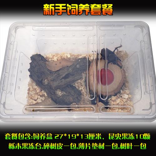 해외 장수풍뎅이 애벌레 사육장 도마뱀 달팽이키우기 코코넛크랩 외각선유충성충인공번데기실니토화번데기우화용품갑-32424, 07.선경 6센티미터 공충