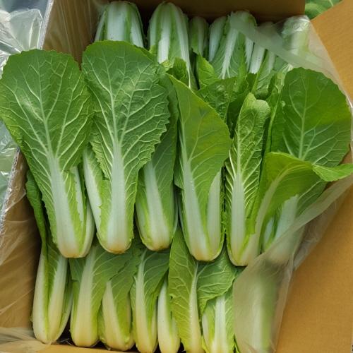 안산팜 신선하고 맛있는 얼갈이배추 (저탄소농축산물 GAP인증), 1개, 얼갈이배추 2kg