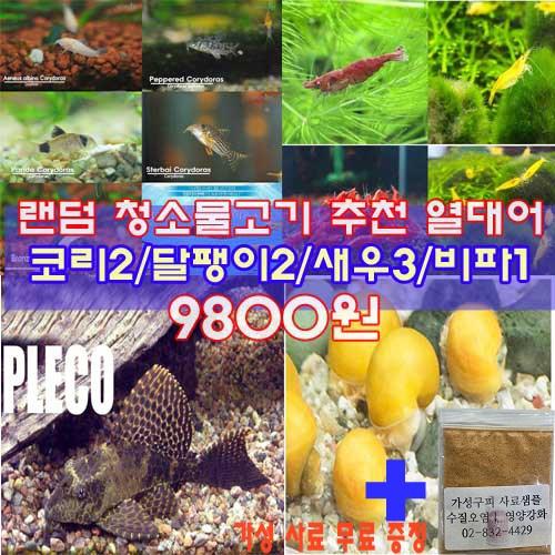 (주)가성아쿠아홈펫 랜덤 청소물고기 추천 열대어 8마리[코리2달팽이2새우3비파1], 8마리