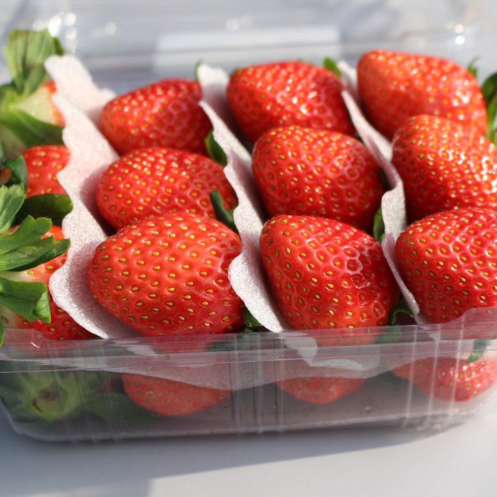 [명일원] 365일 싱싱한 생딸기 금실 죽향 설향 여름 프리미엄 딸기 케이크 데코용, 금실 생딸기 (500g/1팩)