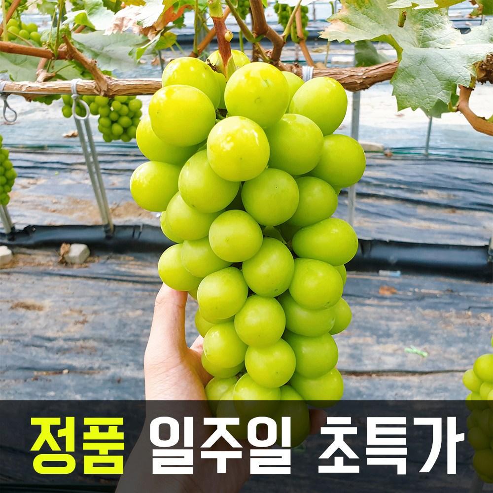 최상품 추석선물 김천 샤인머스켓 망고포도, 특품 1수 600~800g