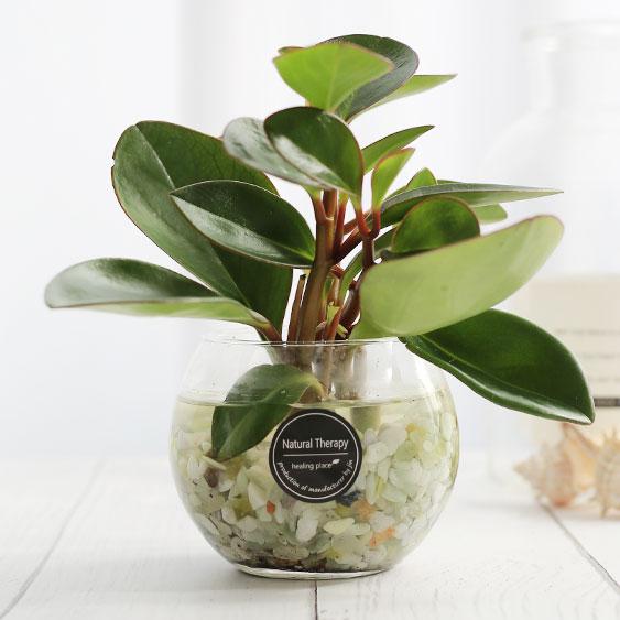 그린테라피 수경재배식물 유리병 실내공기정화식물 수중식물키우기 DIYSET, 홍페페+어항
