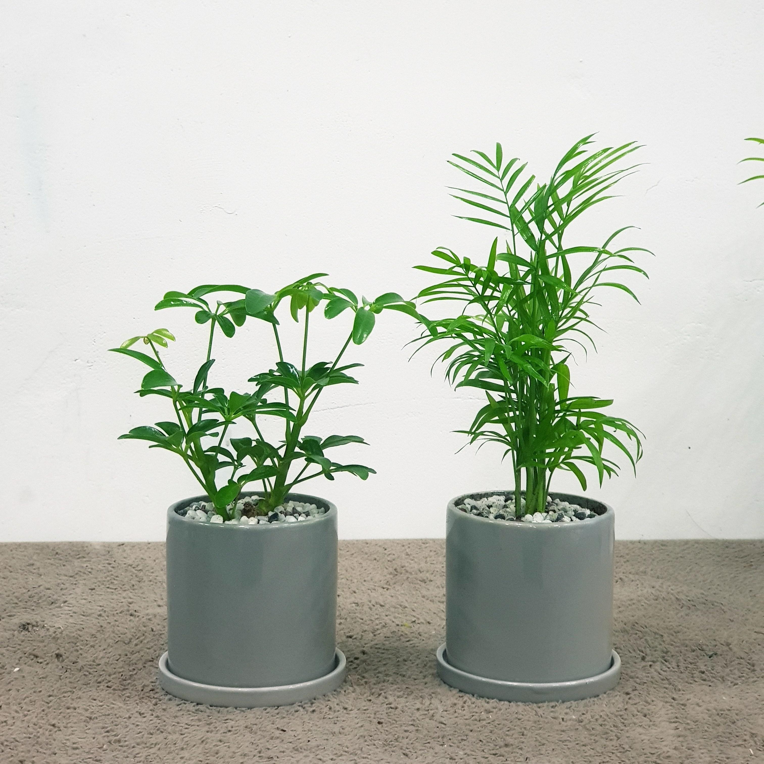 꽃피우는청년 천연가습기 실내공기정화식물 2종 세트 (테이블야자 홍콩야자), 유광 원형 그레이