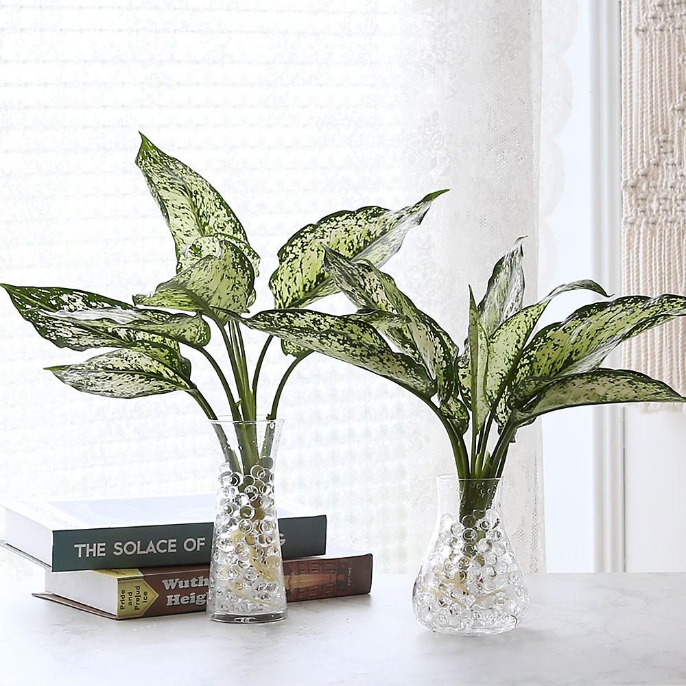 수경재배 스노우 사파이어 공기정화 수중식물, TYPE1(유리화병1+워터비즈1+식물1)