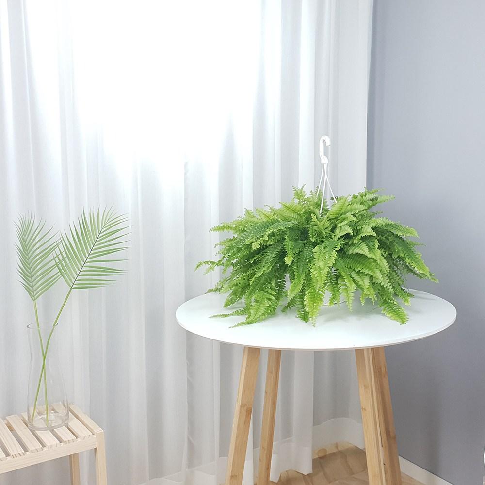 보스턴고사리 늘어지는 행잉 공중 식물 집에서키우기좋은 반음지 습기제거 공기정화식물