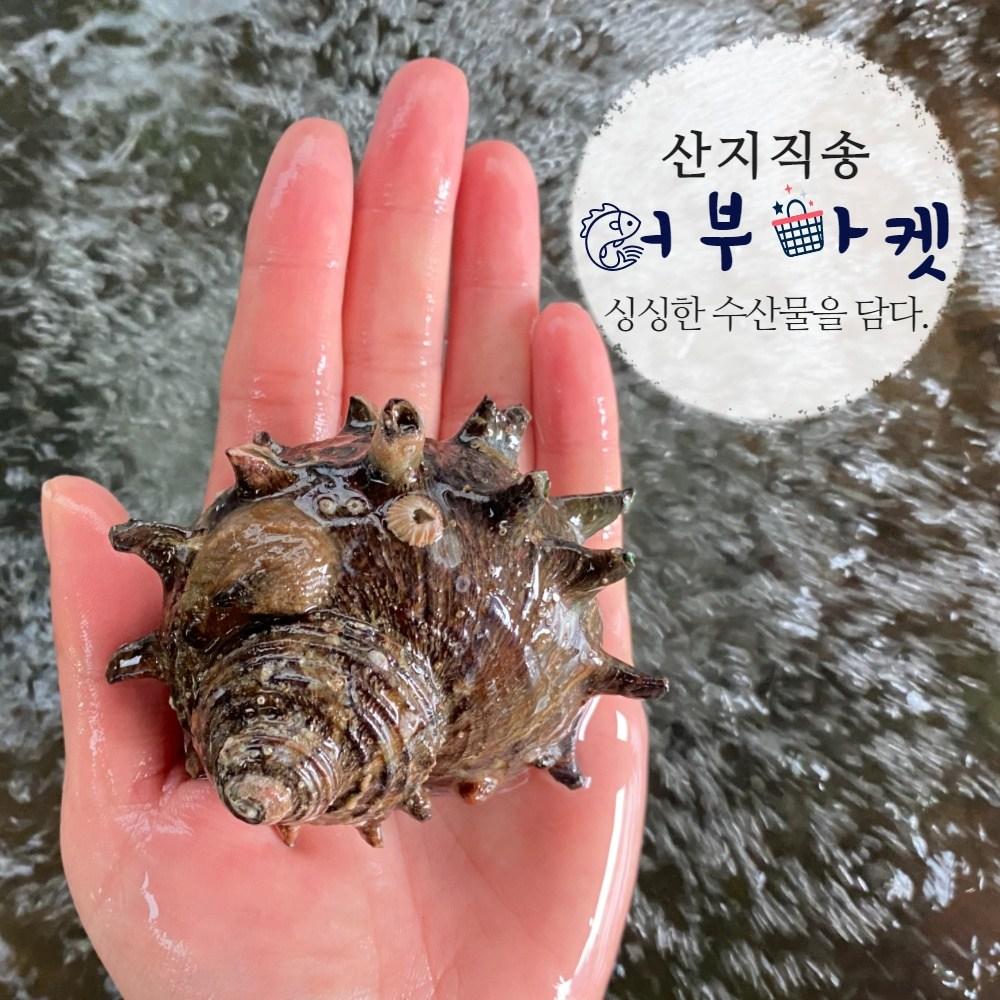 [통영어부마켓] 해녀가 당일 채취한 통영(자연산) 뿔소라 1kg, 1개