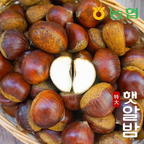 [농협] 토실토실 고소한 순창 알밤 특대 10kg 햇밤, 햇알밤 특대 10kg, 상세설명 참조