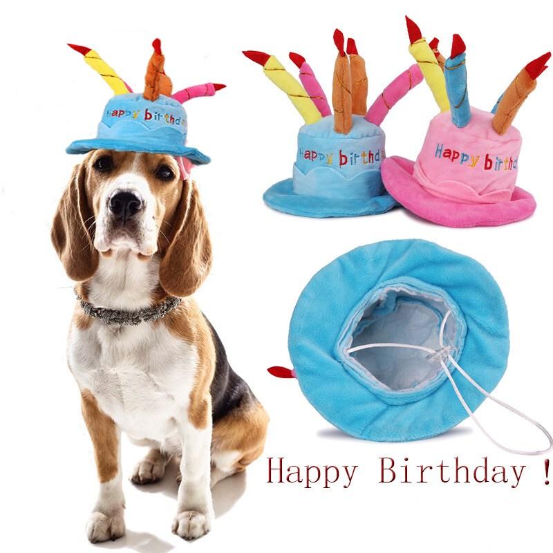 도그월드 강아지 고양이 생일모자 애완동물 파티 케익모자 파티모자, 파티 케익모자 하늘