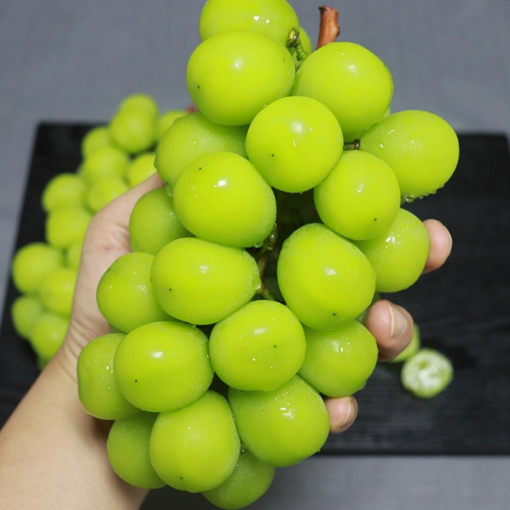 미드미테이블 포도농장 씨없는청포도 샤인머스켓선물세트 애플청포도 추석선물 1.2kg 2kg, 1박스, 샤인머스켓1.2kg(2송이내외)