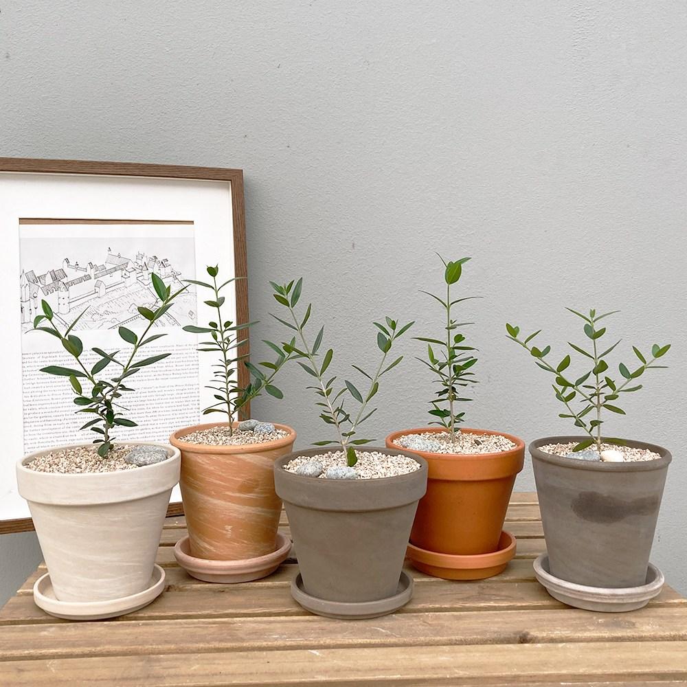 [독일 토분 set] 도시적인 매력의 반려식물 키우기 쉬운 공기정화식물 올리브 나무 독일 토분, 화이트(13cm), 화분받침 없음