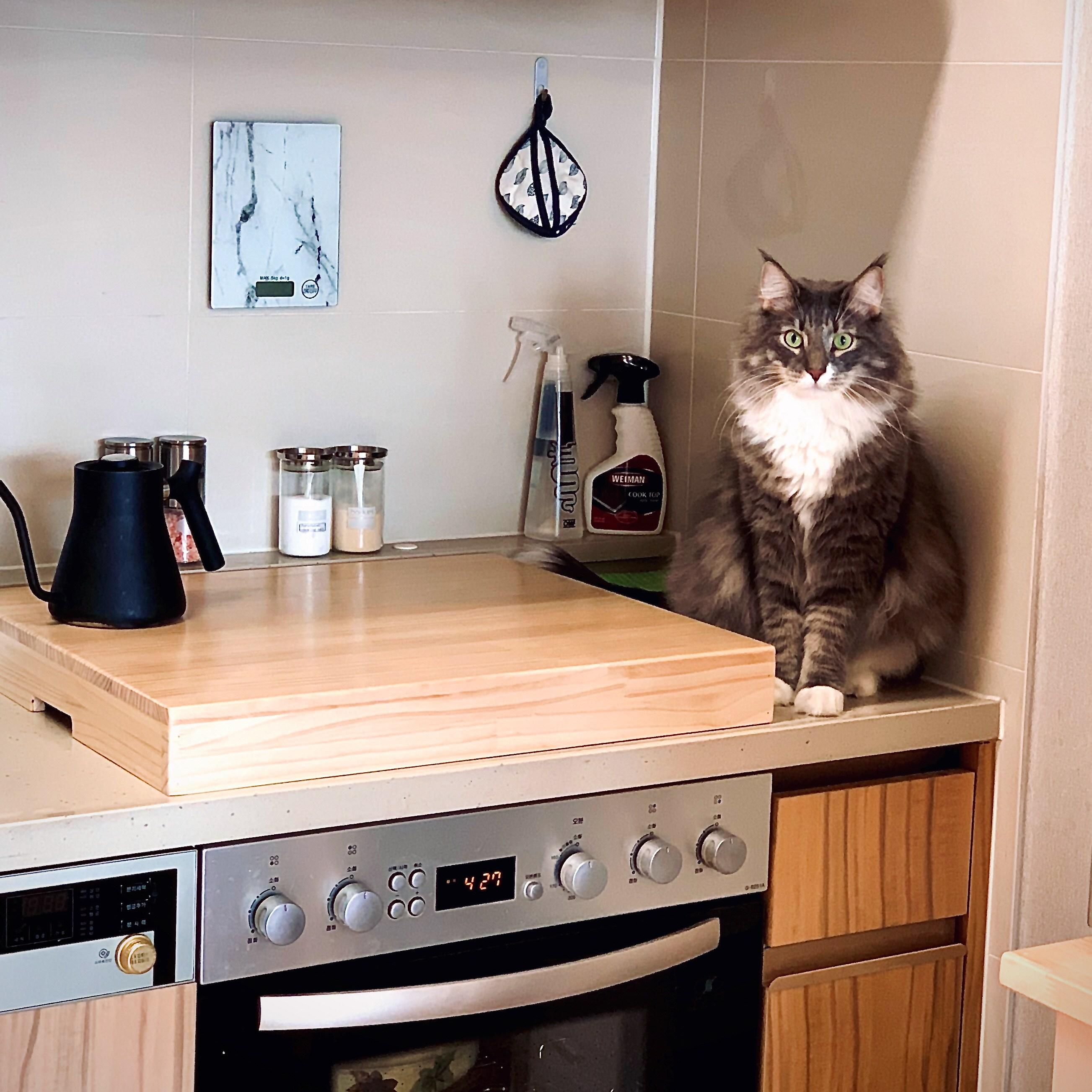 선우산업 원목 인덕션 덮개 - 전기레인지 고양이 누름방지 -맞춤주문제작, 60x52x10