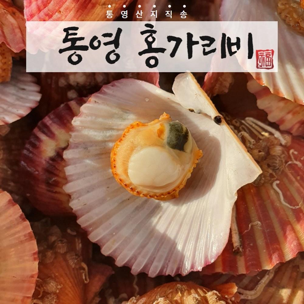 통영지기 깨끗한 통영 홍가리비 1kg 3kg 5kg, 1개