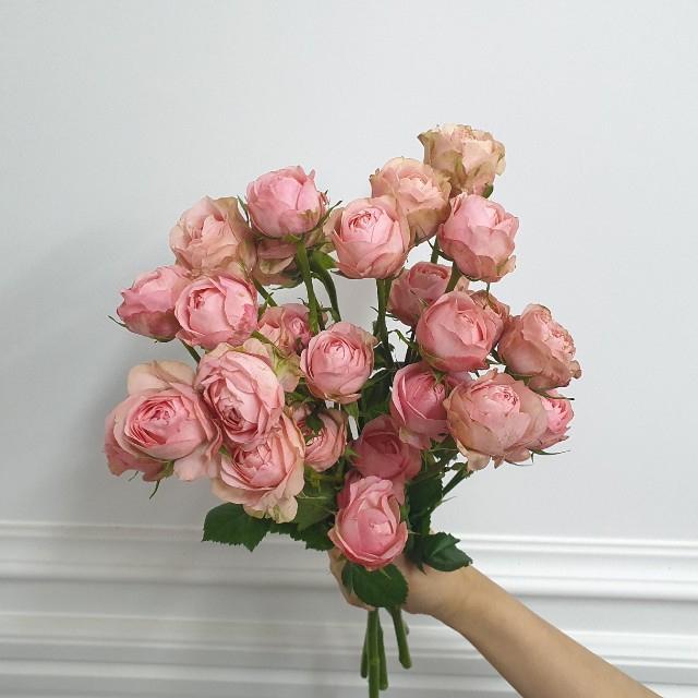 [플라라] 자나 장미 생화 꽃다발, 01. 자나장미 반단
