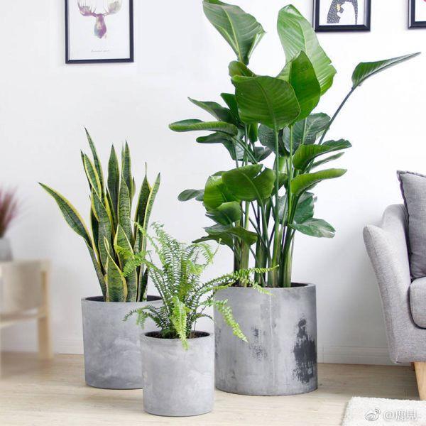 다육 식물 화분 원숭이꼬리선인장 소형 미니 거실 집안 다육이 키우기 좁은현관인테리어 집들이선물, G (POP 5839328874)