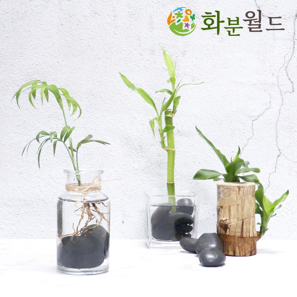 더예뻐진너 우화석(강자갈) 광택 소포장 흑자갈 백자갈 정원자갈, 우화석(광택)(혼합)(1kg)